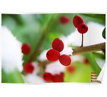 Snow Berrys Poster