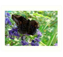 Fairy Butterfly Art Print