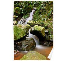 Rainforest Falls Poster