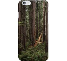 Spotlight In The Redwoods iPhone Case/Skin