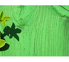 Green Wood Photographic Print