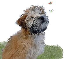 Soft coated wheaten terrier puppy & butterfly by Cazzie Cathcart