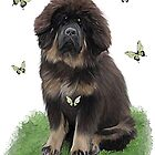 Tibetan Mastiff & butterflies by Cazzie Cathcart