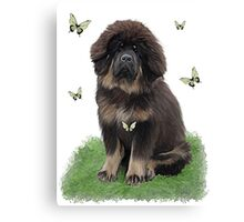 Tibetan Mastiff & butterflies Canvas Print