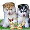 Siberian Husky puppies & butterfly by Cazzie Cathcart