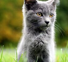 The Kitten by Reptilefreak