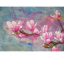 Magnolias XVIII Photographic Print