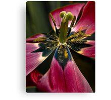 Tulip feast Canvas Print