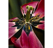 Tulip feast Photographic Print