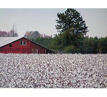 High Cotton Photographic Print