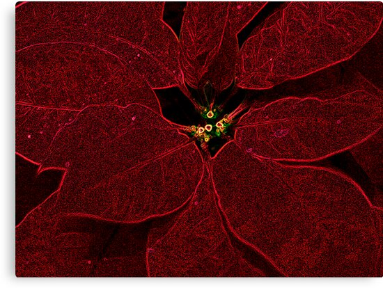 poinsettia by brian gregory