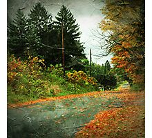 The Fallen (Leaves) Photographic Print