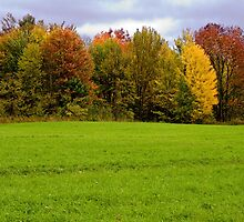 Changing Seasons by Sean McConnery