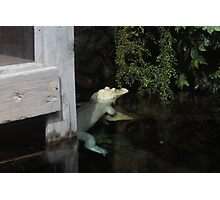 Albino Photographic Print