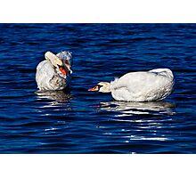 Swans Do Morning Yoga Photographic Print