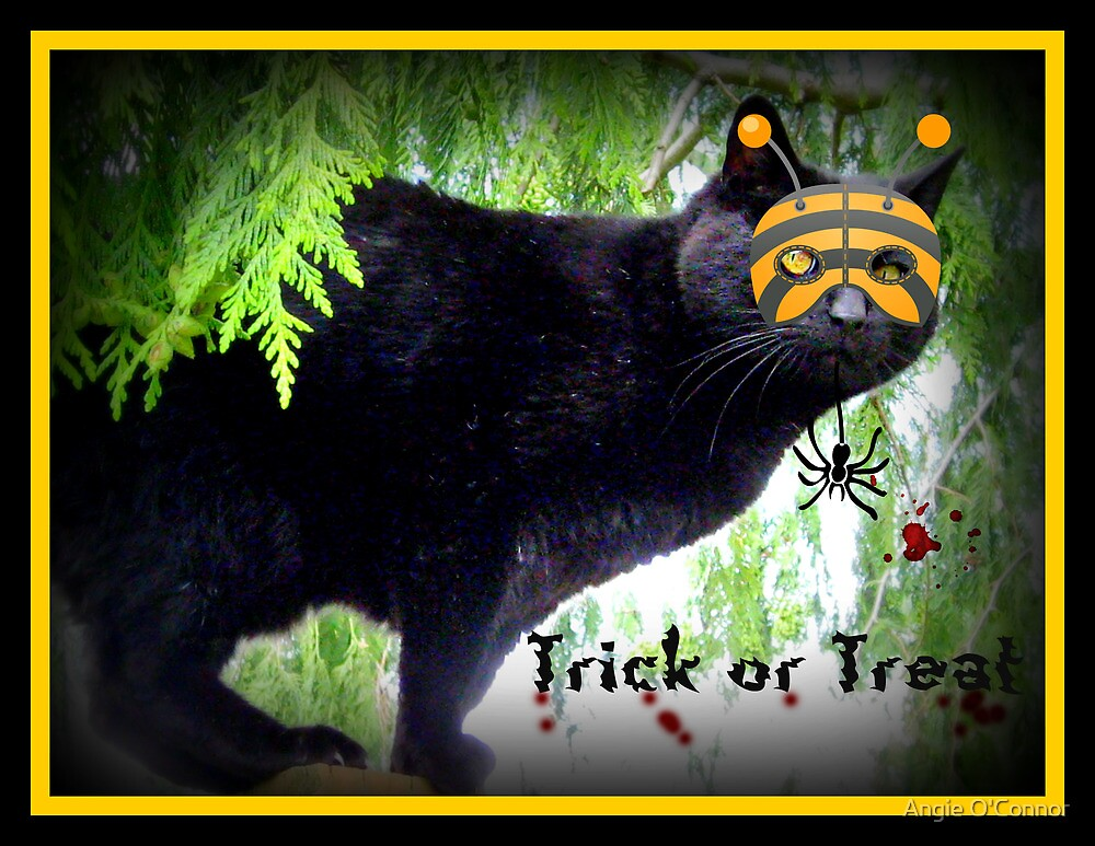Trick Or Treat Cat by Angie O'Connor