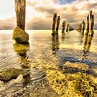 Golden Delight, Clifton Springs by Danka Dear