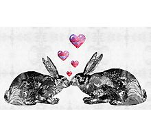 Bunny Rabbit Art - Hopped Up On Love 2 - By Sharon Cummings Photographic Print