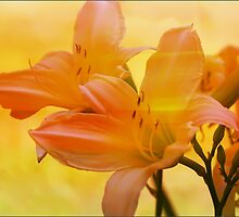 Tropical Beauty by Vickie Emms