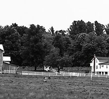 Amish Farm in black and white by Kimberly638