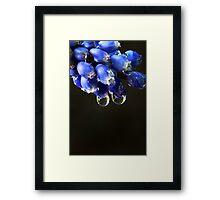 """""""Blue Bells"""" Framed Print"""