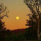 Kimberley Moon , Victoria River Northern Territory . Australia by Virginia  McGowan