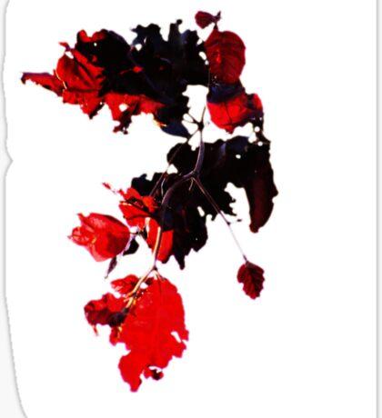 Sun-pierced Red Leaves Sticker