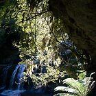 Liffey Falls Tas sunbath by pantsman