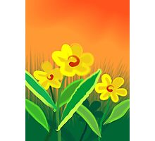 The sunset beauty of the flower  Photographic Print