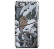Sleeping Mourning Dove in Winter iPhone Case/Skin