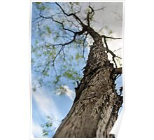 Beautiful Tree Rising Above the Ground Poster