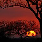 AFRICAN SUNSET - Kruger National Park by Alida Mouton