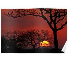 AFRICAN SUNSET - Kruger National Park Poster