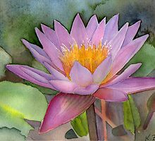 Waterlily by Karin Zeller
