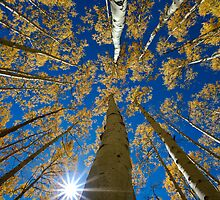 Aspen Canopy - Big Cottonwood Canyon by Clayhaus