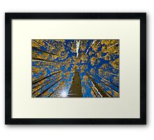 Aspen Canopy - Big Cottonwood Canyon Framed Print