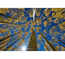 Aspen Canopy - Big Cottonwood Canyon Photographic Print