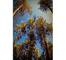 Tree Tops. Photographic Print