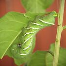Tomato Worm and Baby by sunrisern