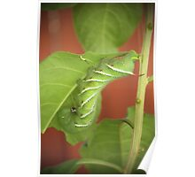 Tomato Worm and Baby Poster