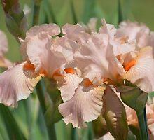 Iris by NatureWaltzArts