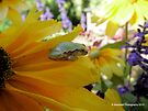 Tree Frog Flower Series 4 of 6 by Barberelli