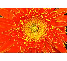 Floral tribute Photographic Print