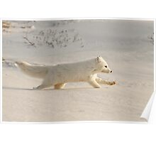 Arctic Fox on the Run! Poster