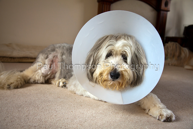 Get Well soon by Paul Thompson Photography