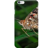 Common Buckeye  (Junonia coenia) butterfly iPhone Case/Skin