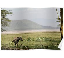 Zebra At A Flamingo-Lined Lake Nakuru Poster