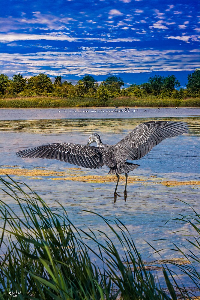 Jamaica Bay Wild Life Refuge, New York by Chris Lord