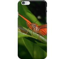 Julia Heliconian butterfly, (Dryas Iulia) iPhone Case/Skin