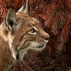 Eurasian Lynx by JMChown